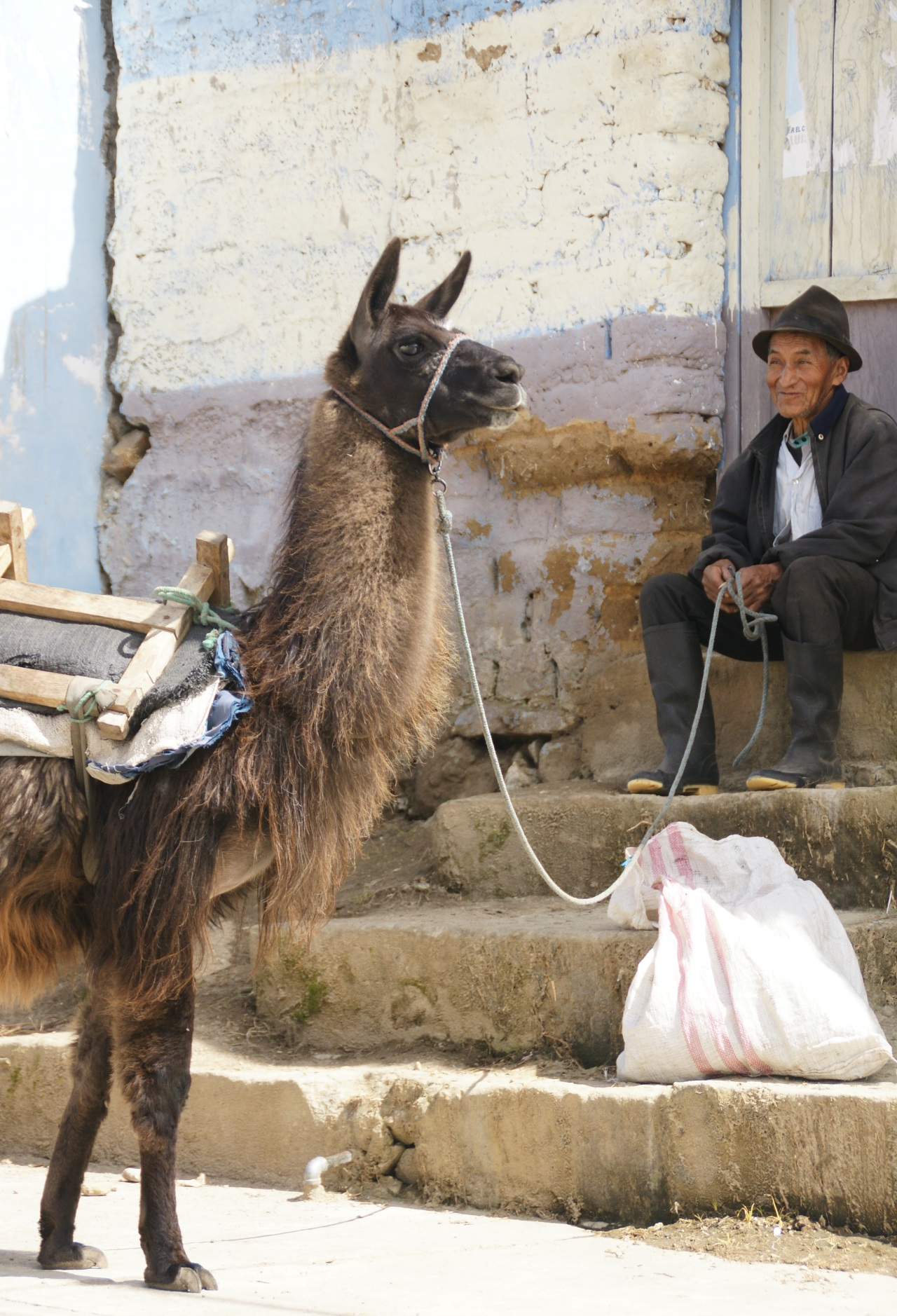 The Old Man Smiles. It's just him and his Llama doing the work today.